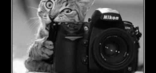 zarabotok-fotografa
