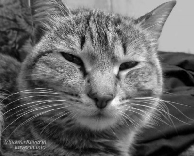 thumb_cat
