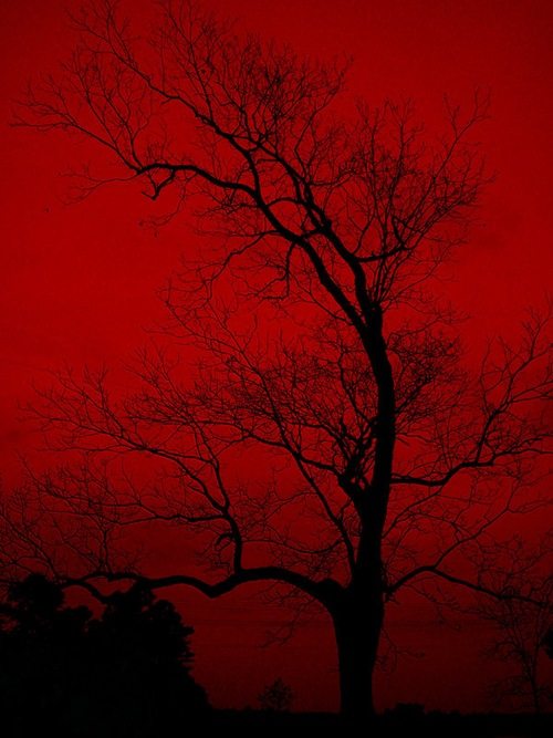 red_sky_by_jasunford