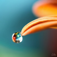 thumb_colors_of_life