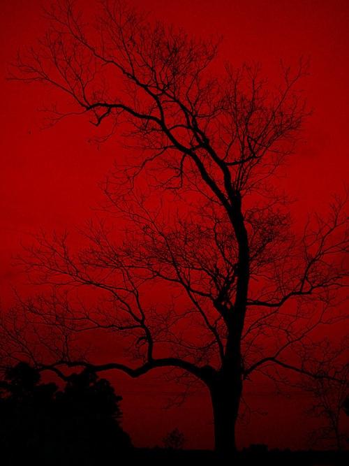 red_sky_by_jasunford