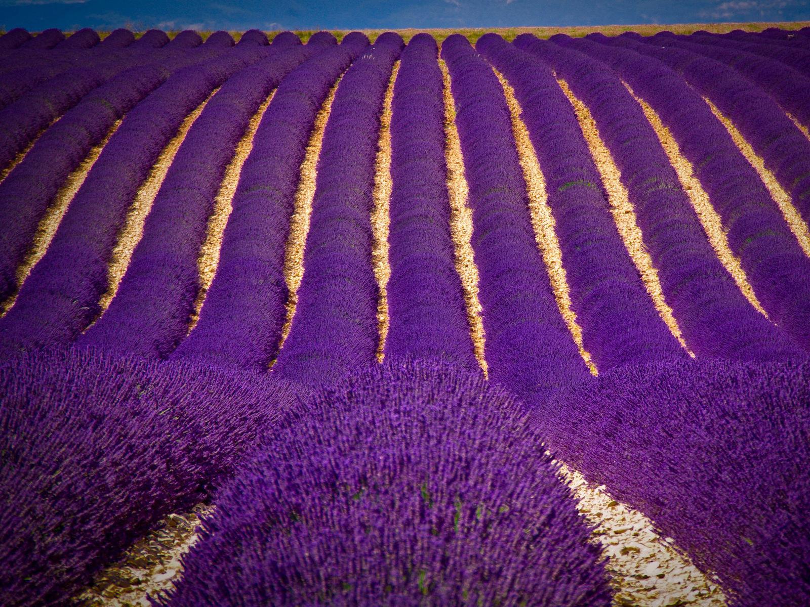 Благородный и таинственный фиолетовый